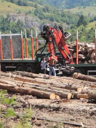 Volumul de lemn exploatat în 2019 a fost de 17,523 milioane metri cubi, în scădere cu 0,2% faţă de 2018