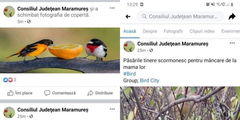 FOTO - Pagina oficială Facebook a Consiliului Județean Maramureș a fost atacată